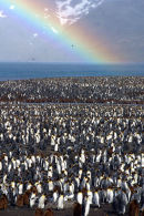 Penguins and rainbow