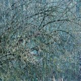 Cannock Chase Fine Art Winter Tree Series cc8015