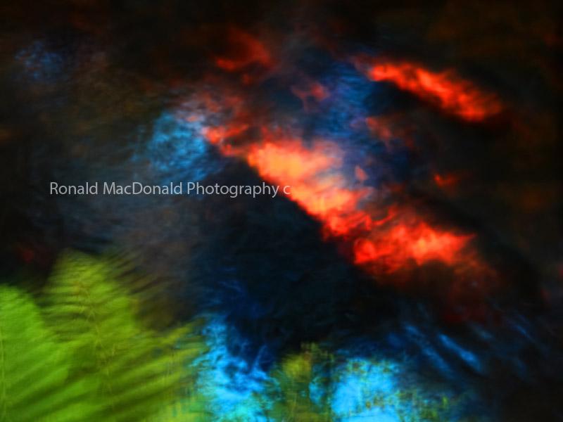 Reflected fern