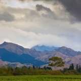 New Zealand16