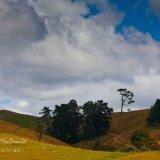 New Zealand1