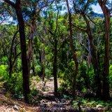 Gum Trees, Grand canyon, Grampians