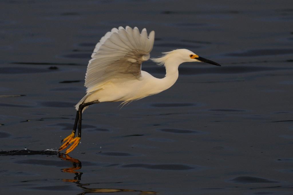 Egret 3