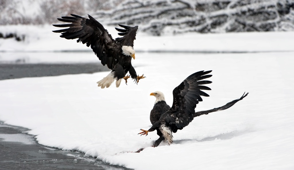 Bad Eagles