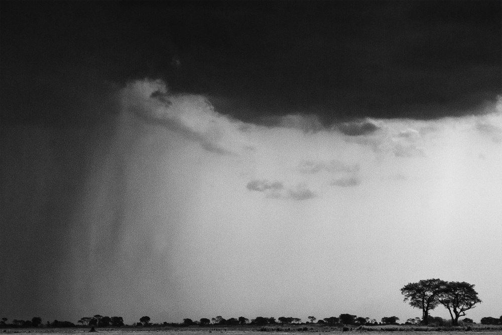 African Short Rains