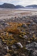 Arctic Shore.