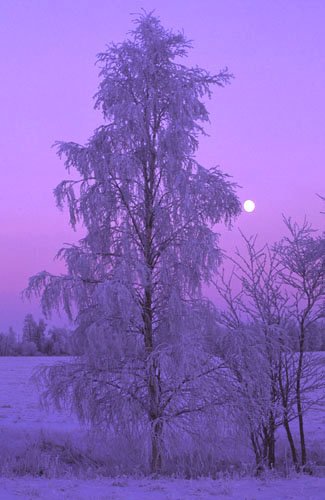 Finnish Dawn 2