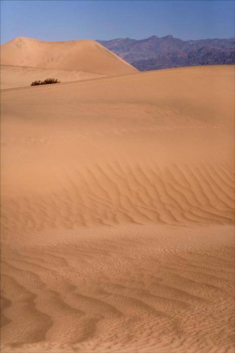Mesquite Dunes 2