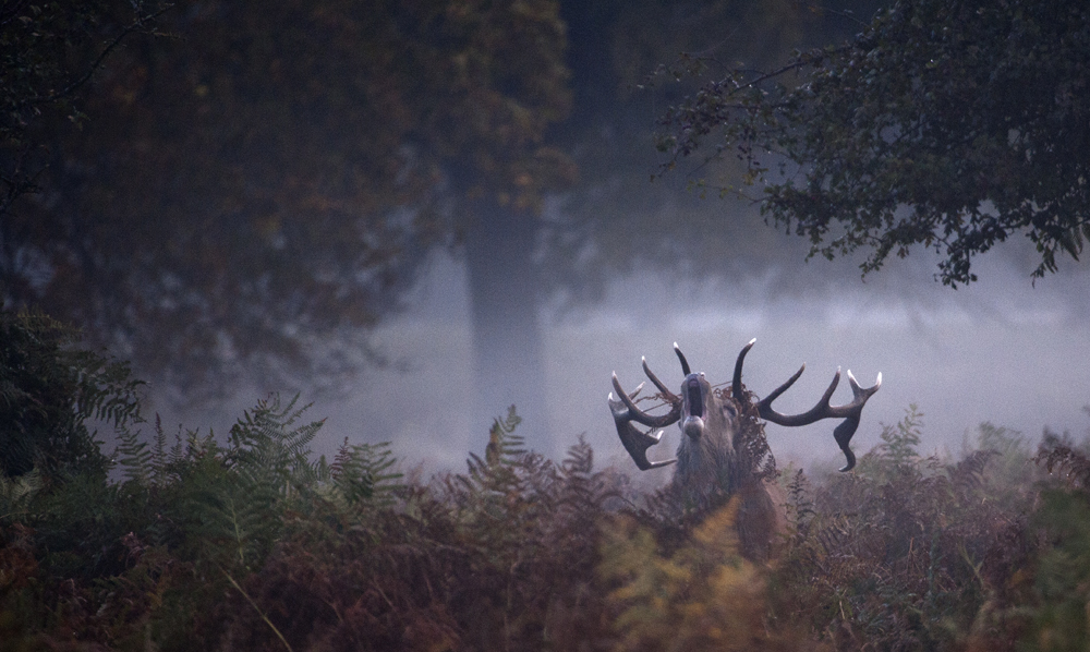 Roar of Autumn