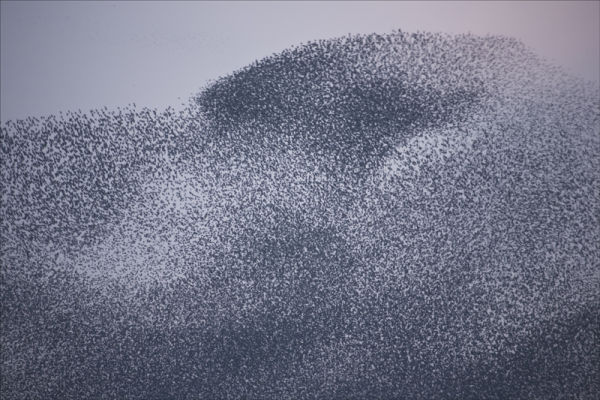 Starling mass.