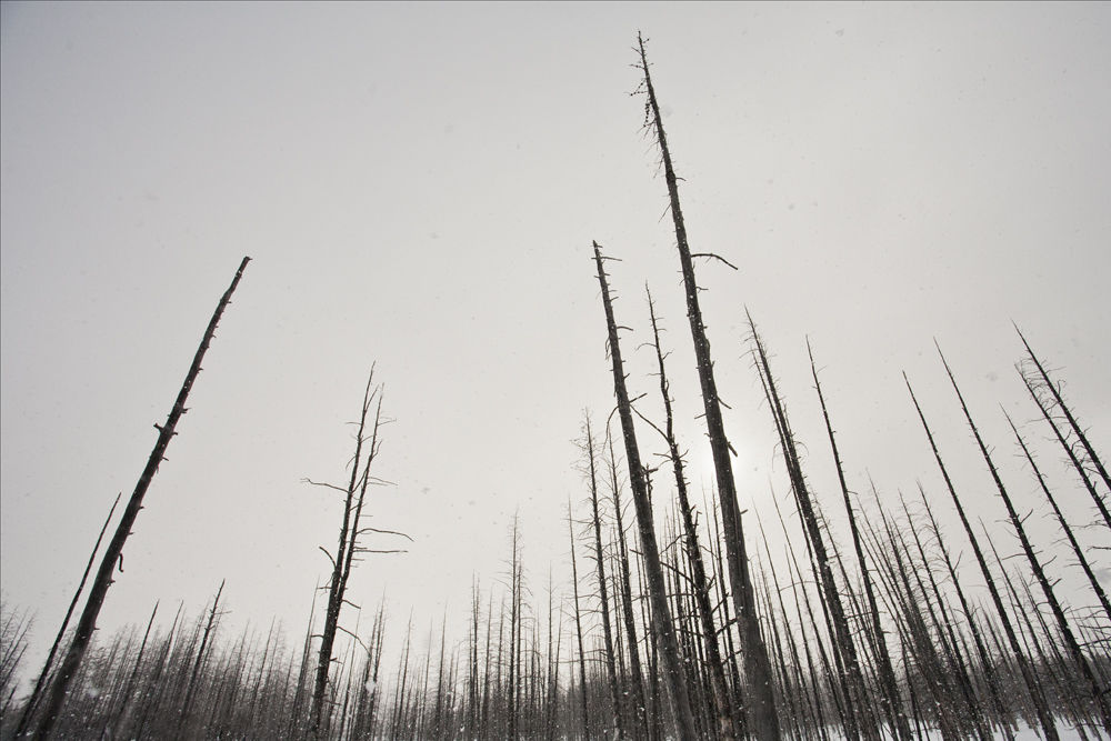 Lodgepole Remains
