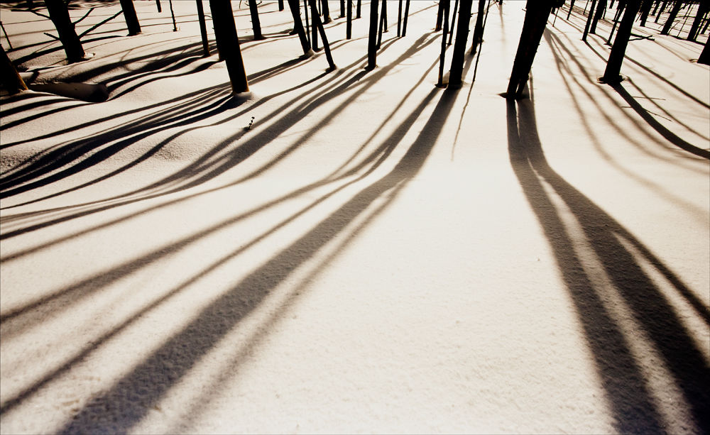 Tree Shadows