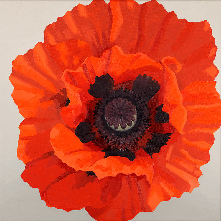 Large Red Oriental Poppy SOLD