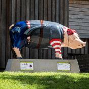 Captain Pigwash
