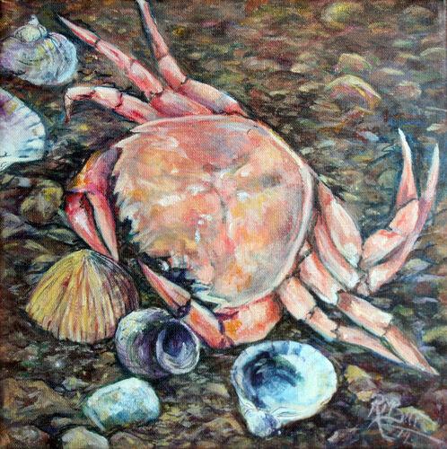 pink crab, on the beach, shells and sand