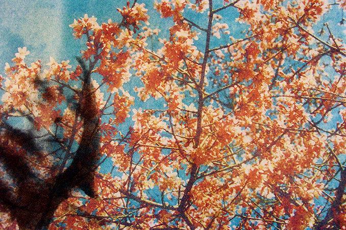 'Van Gough Blossoms', Giclée print on Fine Art Paper