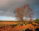 Winter Rainbow in the New Forest