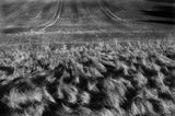 Midwinter Fields