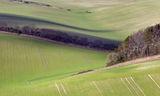 Dorset Landscape 1