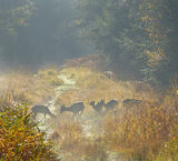 Foraging deer in the New Forest