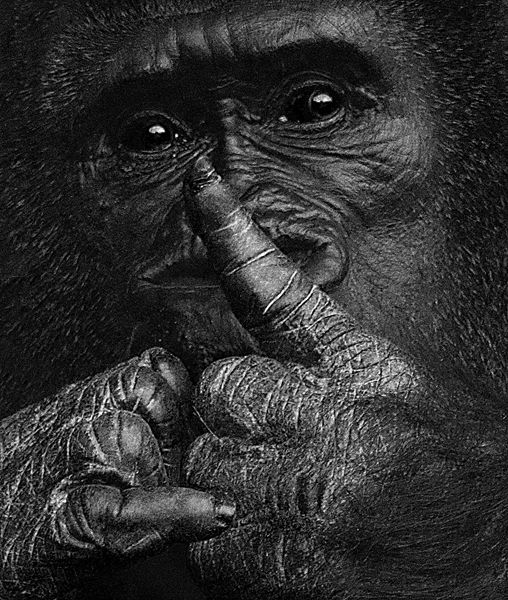 B112 Gorilla