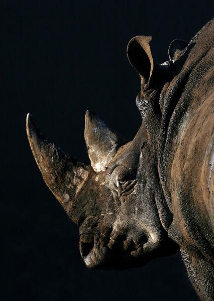 M118 Rhino
