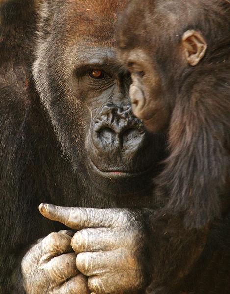 M125 Gorilla