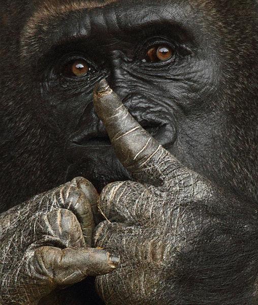 M127 Gorilla