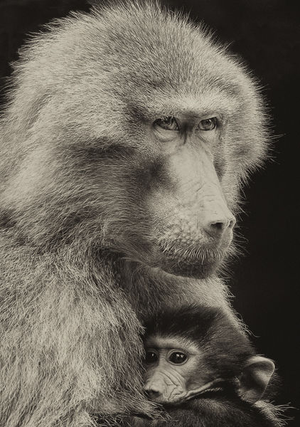 M128 Baboons