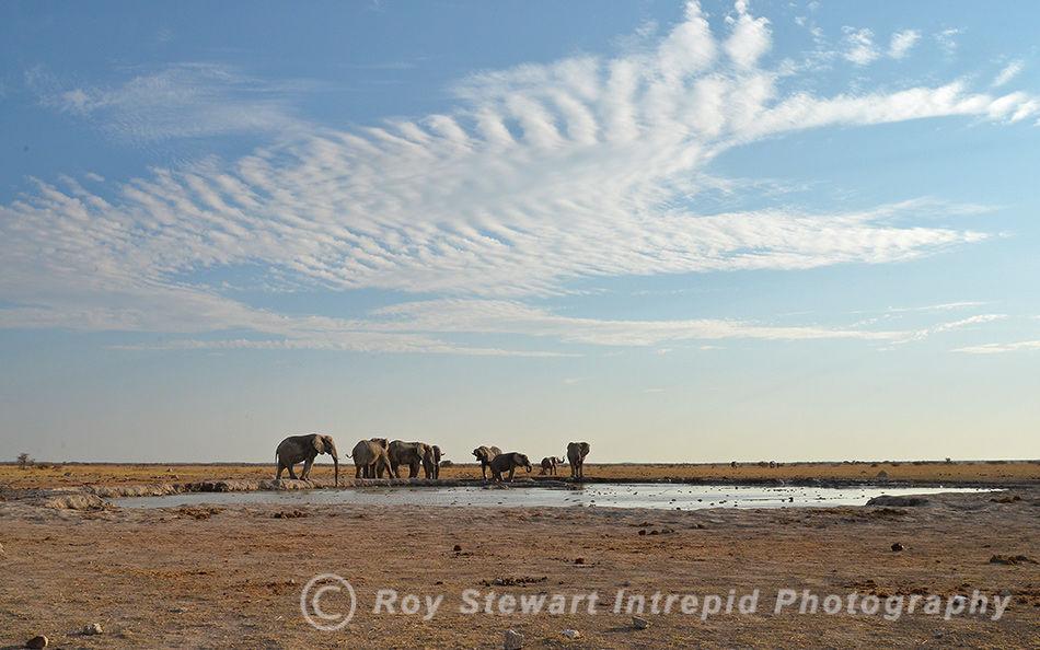 Waterhole, Nxai Pan, Botswana