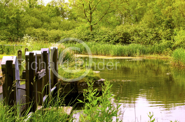 The Sluice at Bell Mills