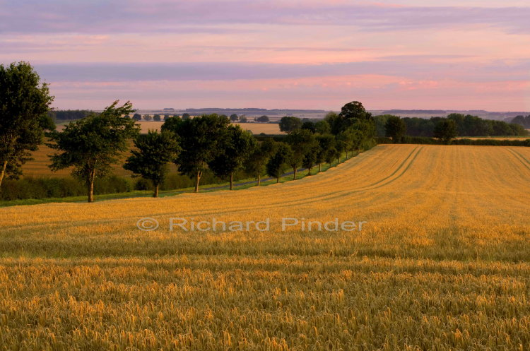 Barley fields East Yorkshire