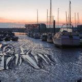 Low Tide at Bridlington Harbour