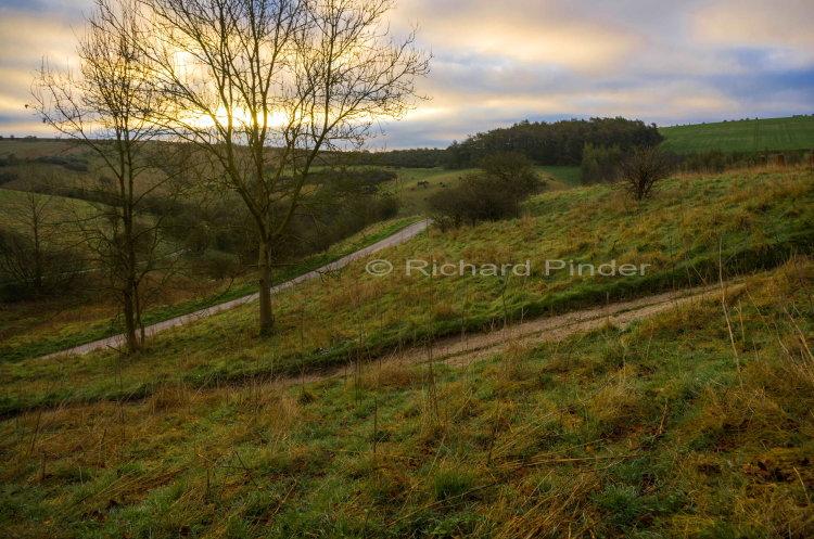 Early Morning Millington Pasture