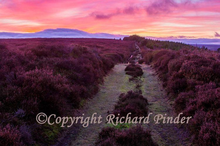 Egton High Moor