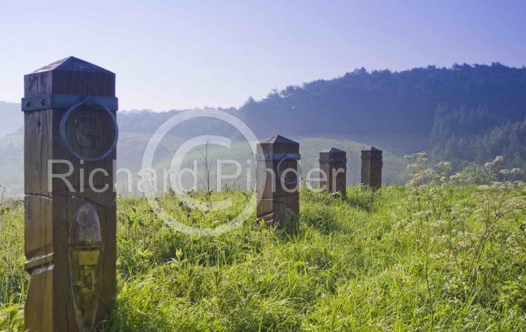 Millington Horse Posts