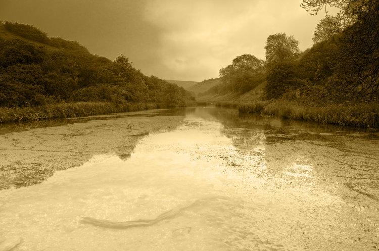 Millington Ponds