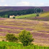 Spaunton Moor, North York Moors