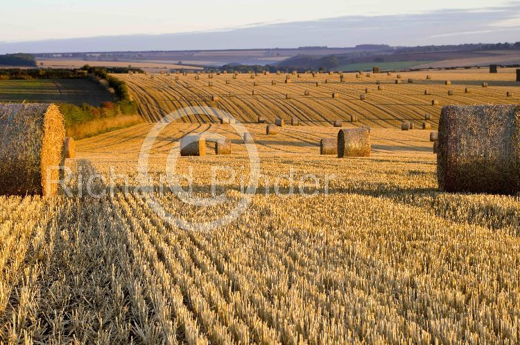 Early Morning Straw Bales