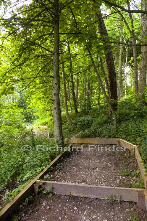 Woodland Walk Lily Dale Millington Wood