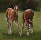 Filly Foals by Jacqueline Stanhope