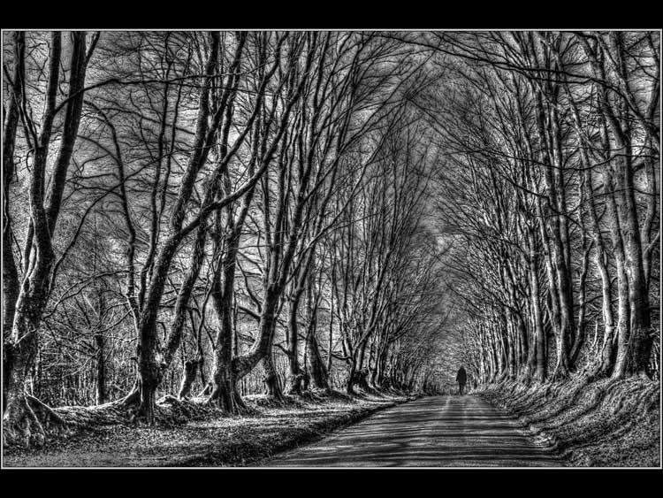 Enchanted Avenue.