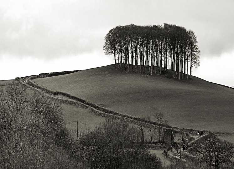 A30 tree clump.