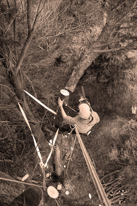 Tree surgeon's view.