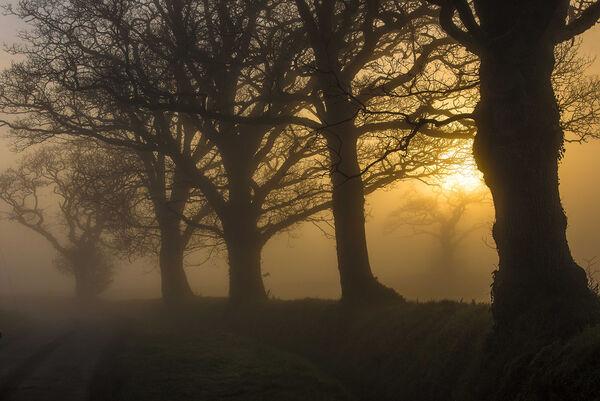 Dawn on a country lane.