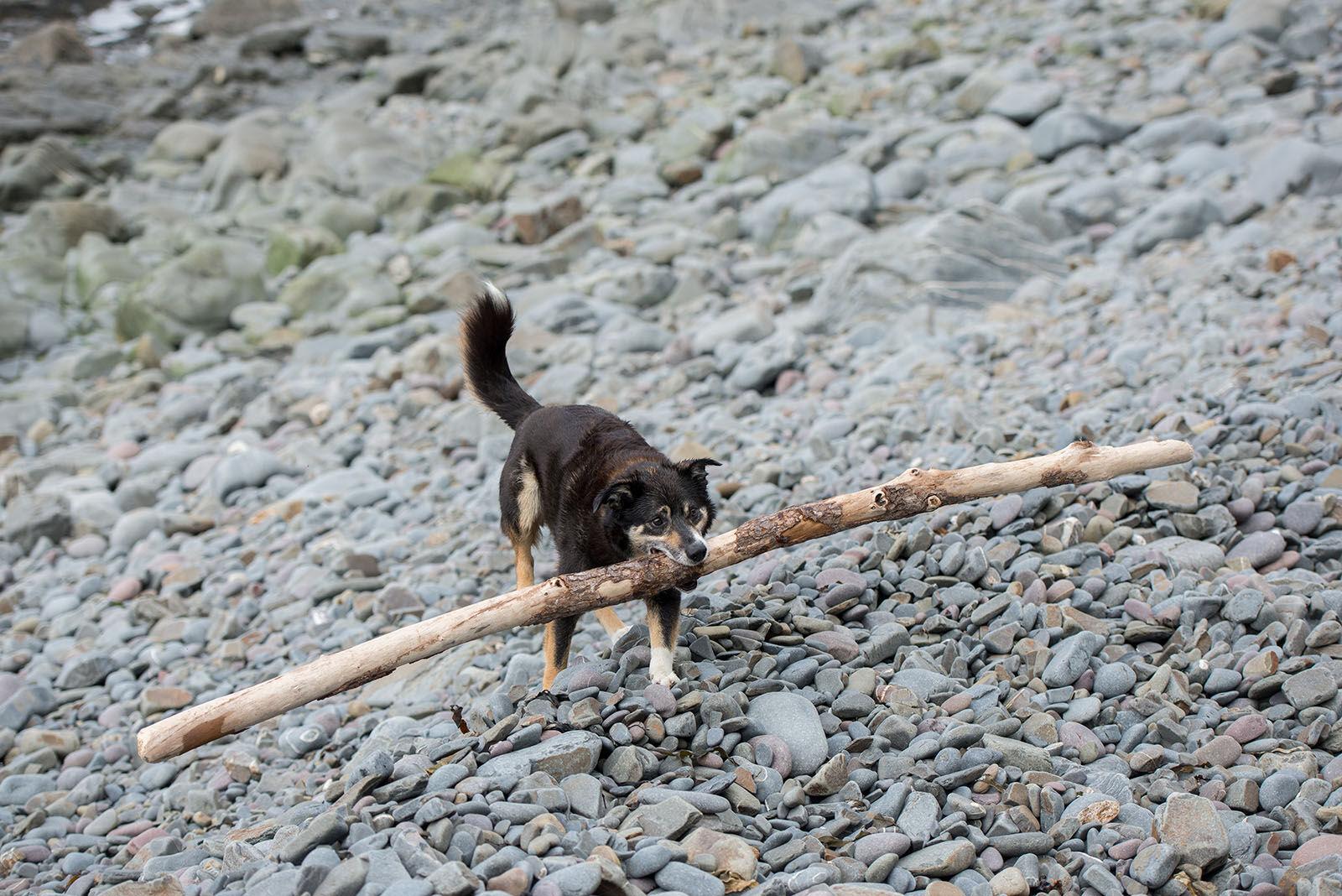Log dog.