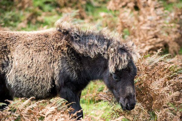 """Dartmoor """"Camo"""" pony."""