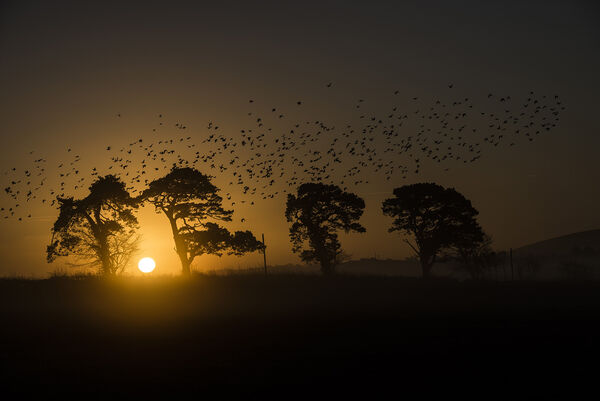 The birds at dawn.