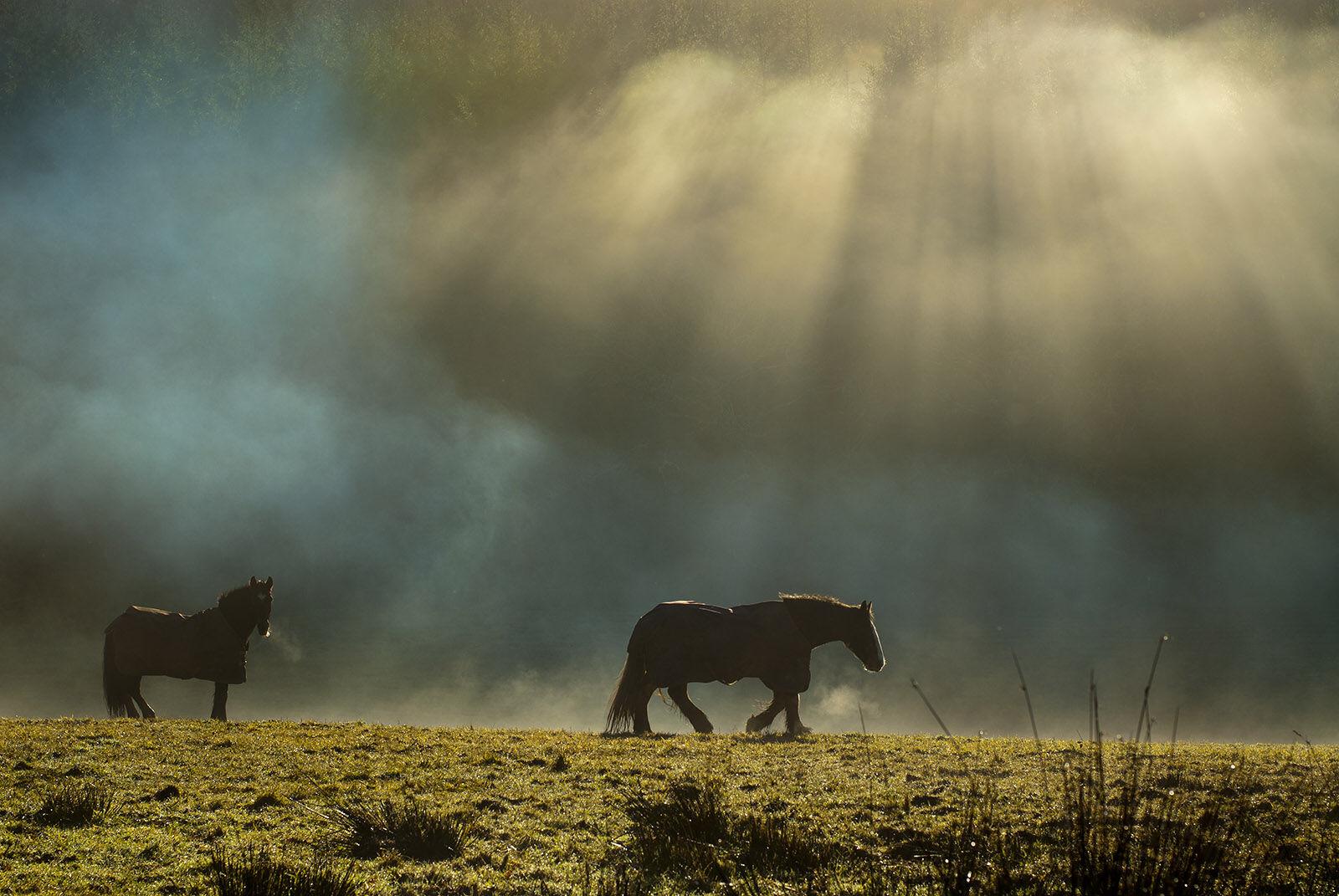 Horses in mist.