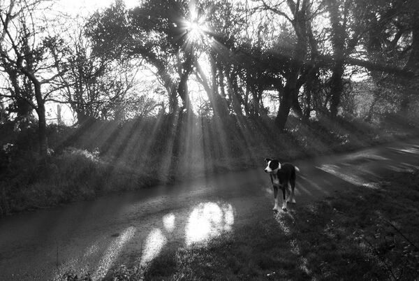 Dog in sun rays.